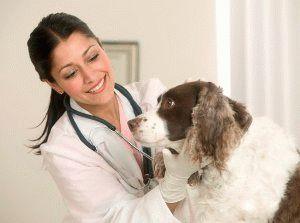 Ветеринарная лицензия