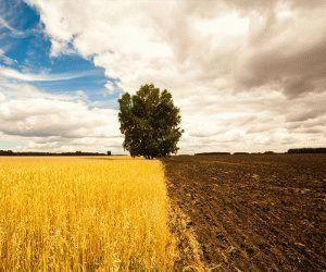 Справка об ограничениях/обременениях пользования земельным участком