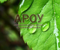 Защита интеллектуальной собственности: права на сорта растений